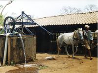 http://akvopedia.org/wiki/Horse_and_wind_powered_pumps